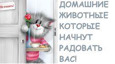 Кот и ФЛАЙ ЛЕДИ/Flylady