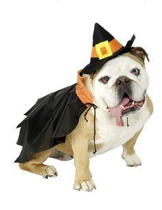Hunde-Kostüm Kleine Hexe