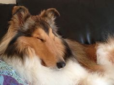 Sleepiness after the Dog Park by HowtoLoveYourDog.com, via Flickr