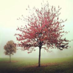 Foggy Trees Heather Ross