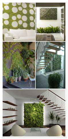 vegetable wall, mur végétal, muro vegetal