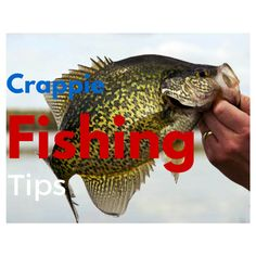 Crappie fishing tips how to catch crappie how to catch for Good beginner fish