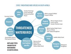 South African bird populations have never been in a worse shape | Saturday Star