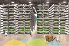 """""""Vertical Farming Is A Thing""""  http://www.fccmg.com/blog/5-shot-friday-good-enough-for-google-myshuti-vertical-farming-n-dimensional-brains-and-checking-at-checkout/"""