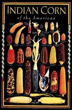 While the poster title is out of date the native corn varietals are beautiful.