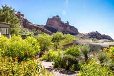 Our mountain casitas are nestled into the desert landscape on the side of Camelback mountain.