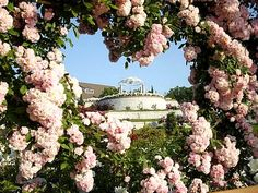 【バラ園2015】日本全国おすすめローズガーデン見どころ解説つき! | つるバラと宿根草の小さな庭づくり