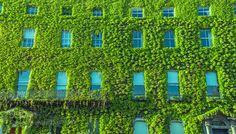 wall of leaves by AbdulrahmanAl-Mopti. @go4fotos