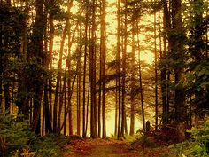 A Maine wood with fog near the water. Silver Wings, Heavens, Forests, Habitats, Canopy, Serenity, Roots, Maine, Owl