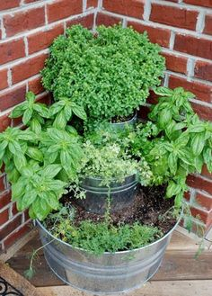 stacked herb garden... would be so cute out on a balcony or indoors in the winter :)