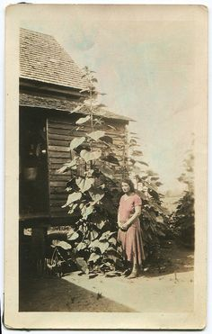Organic Gardening And Farming Magazine Product Antique Photos, Vintage Pictures, Vintage Photographs, Old Photos, Vintage Polaroid, Garden Trellis, Garden Photos, Vintage Colors, Hydrangeas