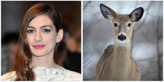 Celebs that look like animals, silly