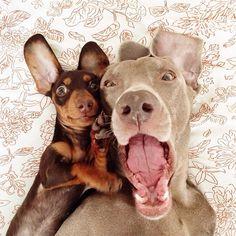 A incrível amizade entre um cão gigante e um filhote...<3