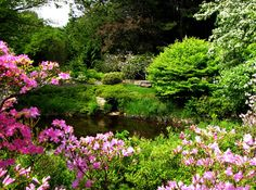 Getting lots of inspiration from Japanese gardens for spring.