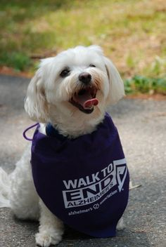Participants in the Walk to End Alzheimer's - www.alz.org/walk - can bring their dogs to join in the fun. Alz Org, Walk To End Alzheimer's, Alzheimers, Join, Bring It On, Walking, Events, Purple, Walks