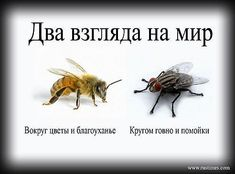 https://otvet.imgsmail.ru/download/77642ae9866dc65f3535937dd231b987_i-1464.jpg