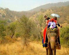 Elephant Safari in Jaipur - and other 50 Places to Visit & Experiences in India Before You Turn 30