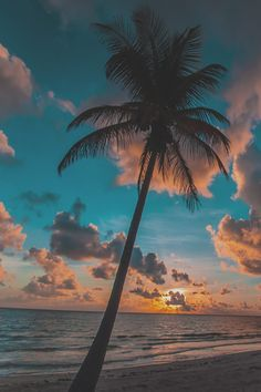 """Earthlycreations: """" carribean dream by ryan strate """" wallpaper backgrounds, palm tree iphone wallpaper Sunset Wallpaper, Nature Wallpaper, Wallpaper Backgrounds, Phone Wallpapers, Tree Wallpaper, Aesthetic Backgrounds, Aesthetic Wallpapers, Sky Aesthetic, Pretty Wallpapers"""