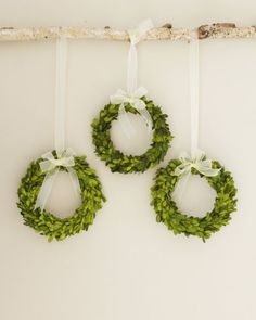 Preserved Boxwood Wreaths hanging from rustic branch....easy decorating idea!