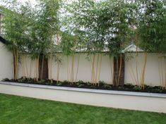 Bamboo! Screening for the garden, low maintenance, and makes a lovely sound when the wind blows through it.