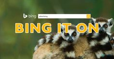 Love it or hate it, Bing has what every advertiser wants: Competitors advantage. So should you advertise on Bing? Web Analytics, Telling Stories, Digital Marketing, How To Find Out, Blogging, Hate, Advertising, Social Media, Social Networks