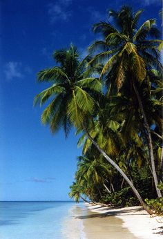 Paradise beach - Tobago #Caribbean