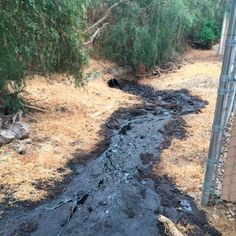Ventura County Firefighters stopped a massive oil leak that would have seen 700 barrels of crude oil - equivalent to gallons - hitting the Pacific Ocean on Thursday morning. Big Oil, Oil Spill, Ventura County, Fire Dept, Fire Department, California Coast, Ventura California, Crude Oil, Environmental Issues
