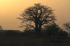 Images: TOEGO-ZEBILLA: Silhouettes of a Baobab Tree