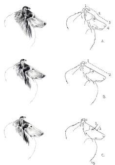 Rough Collie, Collie Dog, Border Collie, Blue Merle Sheltie, Big Fluffy Dogs, Horror Show, Dog Illustration, Dog Wedding, Animal Sketches
