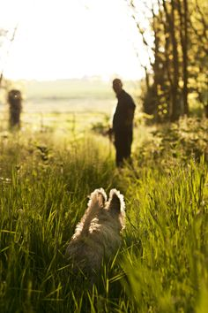 by Joy Lynn Fielding (Mar. family activity - walking the dog I Love Dogs, Cute Dogs, Farm Animals, Cute Animals, Cairn Terrier, Terriers, Summer Dog, West Highland Terrier, Dog Walking