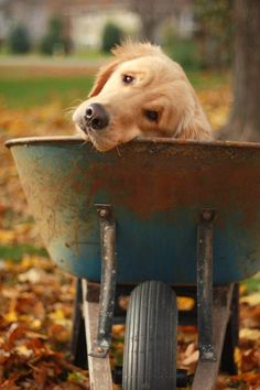 5 Best Dog Breeds For Your Golden Years