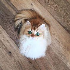 This cat looks like it's wearing eyeliner <333
