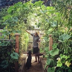 Kyle your garden is beautiful.  Who shares our opinion?  #urbangarden #gardening #UrbangardenboardUGR Credit (IG) @urbanfarmstead