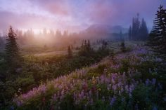 Mt Rainier National Park, Nature Aesthetic, Psychedelic Art, Pretty Pictures, Mother Nature, Beautiful Places, National Parks, Scenery, Mount Rainier