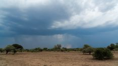 A static timelapse of a dry, barren landscape (bushveld area) in a game reserve while a thunderstorm with heavy rain and lightning is approaching, guinea fowl scatter past. Guinea Fowl, Game Reserve, Thunderstorms, Stock Footage, Lightning, Past, Country Roads, Trees, Paintings