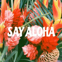 i have no idea when i started saying 'aloha' but it's kind of become my thing at this point. haha