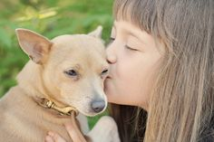 MUSCH – Koska rakastan koiraani Corgi, Photos, Animals, Corgis, Pictures, Animales, Animaux, Animal, Animais