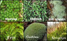 Live Moss & Lichen 1 gallon bag best deal and quality beautiful garden fairy house bonsai vivarium indoor plant fast delivery