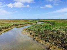 Oyster Point - Daniel Island SC
