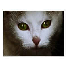 Search for customizable posters & photo prints from Zazzle. Celtic Fantasy Art, Emerald, Kitten, Eyes, Prints, Poster, Animals, Cute Kittens, Kitty