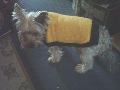 Hand Knitted Dog Jumper (coat) - fits 8.5kg dog £5.95