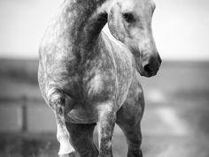schöne-pferde-bilder-ein-schönes-galoppierendes-pferd