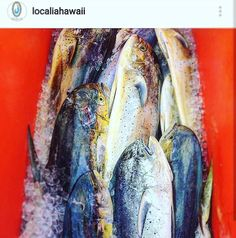 Proud to be working with @localiahawaii, a new supplier commited to local, fairtrade, sustainable seafood!! Our Fisherman's Friday Blackboard Special tonight is #localiahawaii sustainably caught Mahi Mahi! 📷: @localiahawaii Sign up for their CSF for fresh fisherman-to-family #seafood! #local  #luckywelivehawaii #sustainable #fairtrade #ecofriendly #ethical #environmental #fishing #community #supported #fishermen #12thavegrill  #blackboardspecial