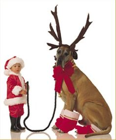 @Mary Lammert- you will have to wait a little while, but I think Jerry would make an awesome reindeer!