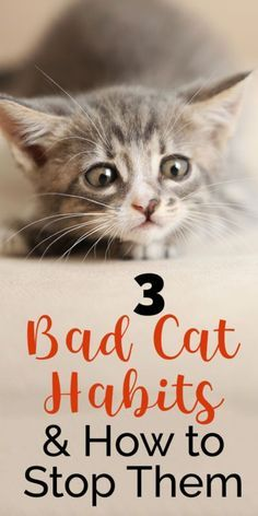 You love your cat, they're adorable, fluffy, cute...but sometimes they have a few behaviors that are less-than-cute. Things like messes outside the litter box or scratching can be a problem for any pet owner, but luckily there are ways to tackle these issues. Take a look at three common bad cat habits and how you can stop them.