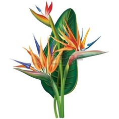 Visualization Basics Tropical Leaves Contour Drawing From in tropical flower drawing Strelitzia reginae flower on white vector image on Tropical Flowers, Tropical Art, Exotic Flowers, Tropical Leaves, Plant Painting, Plant Drawing, Painting & Drawing, Botanical Drawings, Botanical Prints