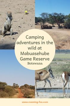 Camping adventures in the wild at Mabuasehube Game Reserve, Kgalagadi, Botswana Camping Glamping, Camping Life, Adventure Jeep, Game Reserve, Africa Travel, Travel Goals, Amazing Destinations, South Africa, Travel Inspiration