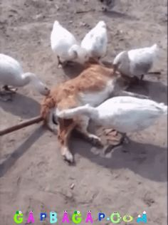 Funny GIF Of The Day ft.Funny Dog