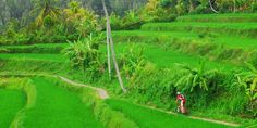 Bikereise Indonesien | Bali und Java per Bike entdecken | Biketeam Radreisen Bali, Golf Courses, Europe, Tours, Indonesia, Waterfall, National Forest, Travel