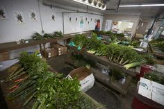 Foliage ready to be processed, packaged and shipped via Fern Trust's specially cooled trucks!